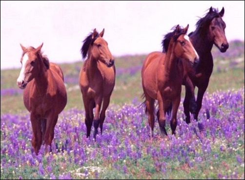 Horses-Spring-Joy-spring-wallpaper